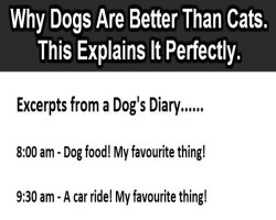 This Will Explain Why Dog's Are Far Better Than Cats