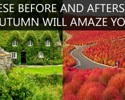 12 Breath Taking Before and After Autumn Photos