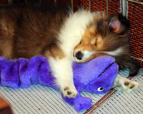 Cute Animals Sleeping With Stuffed Animals