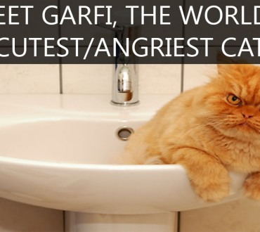 Meet Garfi the Cat, The Most Angry Guy On Earth.