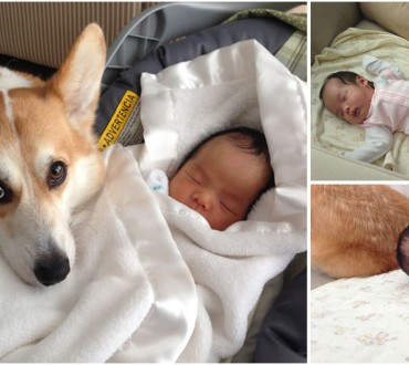 This Couple was Worried About the Dog Meeting the Newborn – But They Were Quickly Amazed!
