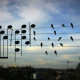 He Saw These Birds on a Wire And Converted Them Into Music