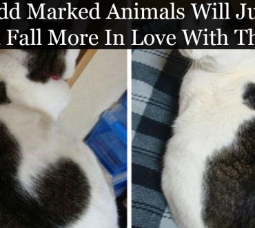 17 Animals with Very Unusual Markings