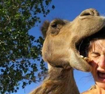 27 Photos: When Animals Photobomb