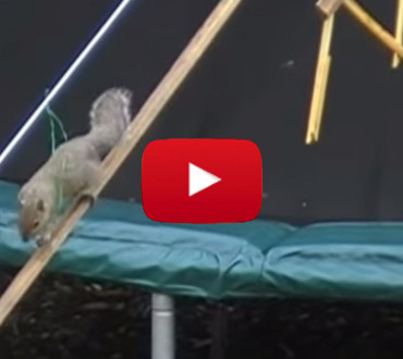 Man Builds Squirrel Obstacle Course in His Garden. What Follows is Epic