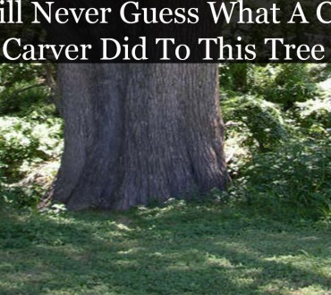 Man Takes A Tree Trunk And Does Something Amazing